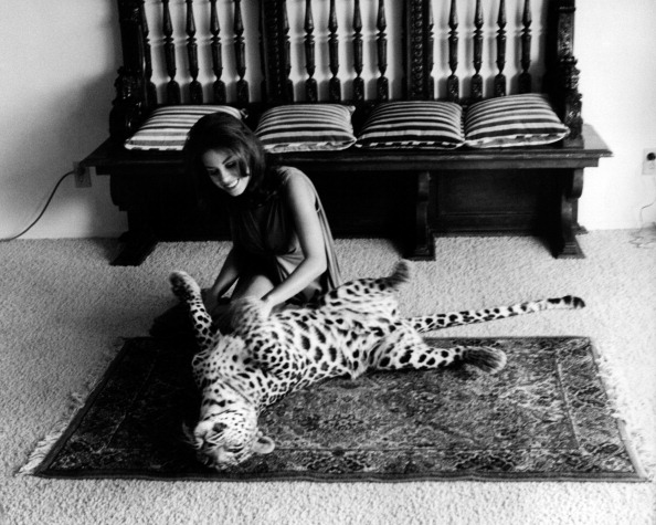 Lana Wood playing with a leopard